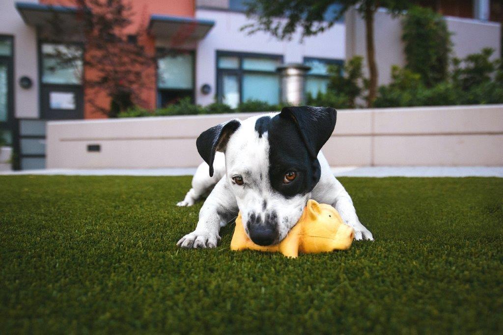 dog on pet grass