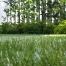 fake grass myths