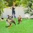 quality pet turf